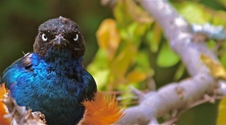 паблики и группы о птицах в социальных сетях