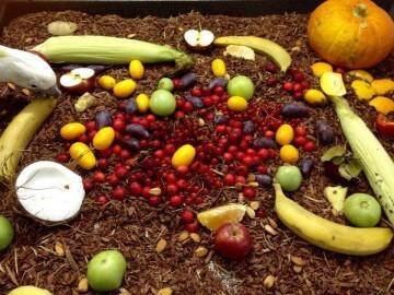разнообразное кормление попугаев, какие корма нужны попугаям жако, какаду, ара, амазонам, ожереловым, александрийским, каикам, сенегалам, аратингам