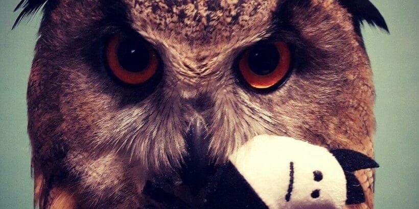 чем кормить сову, филин Йоль фото Ники Зубра.