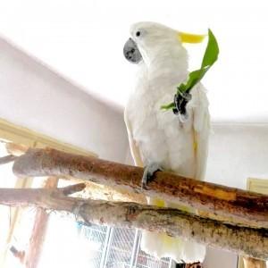 кормление попугаев какаду