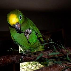 корм для попугая, травы в рационах попугаев