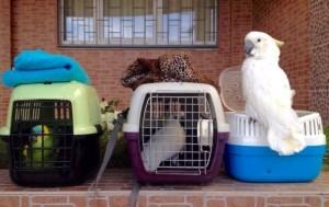 поездка с птицами к ветеринарному врачу