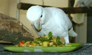 какаду гоффина, овощное рагу, лакомство, корм,