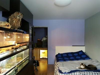 комната для совы
