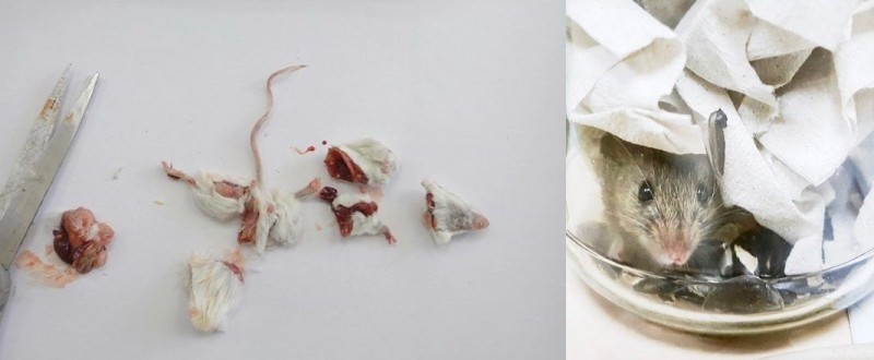 кормление совы, мышы, хомяки, крысы