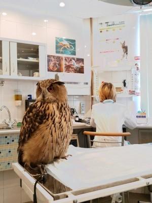 ветеринарный врач для совы, лечение
