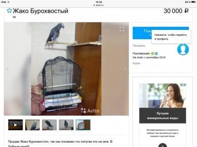 купить ручного попугая жако на авито дешево