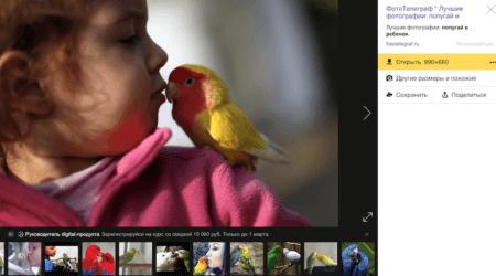 болезни птиц попугаев опасные для человека орнитоз, туберкулез, сальмонеллез, иерсиниоз