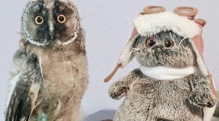 птенцы совы совята спасли что делать чем помочь, как кормить, содержать