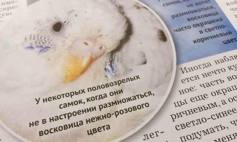 восковица волнистых попугайчиков, что значит цвет