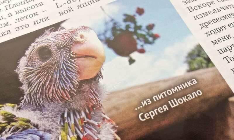 статьи из второго номера журнала для любителей попугаев. Розеллы. Роман Попов