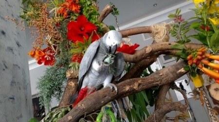 как самостоятельно сделать игровой стенд для попугая жако