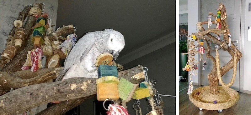 какие игрушки повесить на игровой стенд для попугая жако
