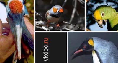 Лечение птиц, попугаев, сов, врановых, хищных, домашних, певчих, экзотических. Ветеринарный врач, орнитолог, вызов на дом. Москва.