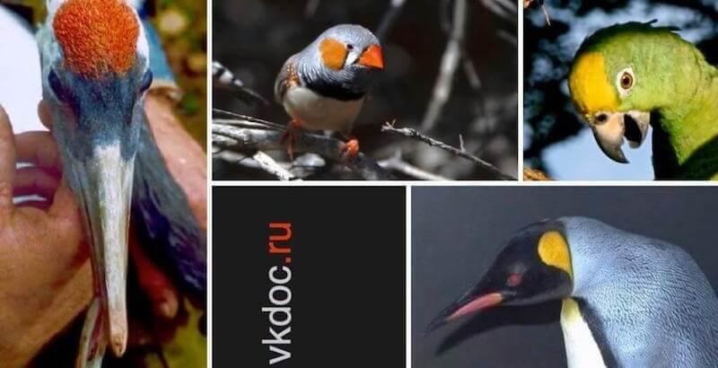 лечение птиц, ветеринар орнитолог, консультации онлайн. Валентин Козлитин. Контакты.