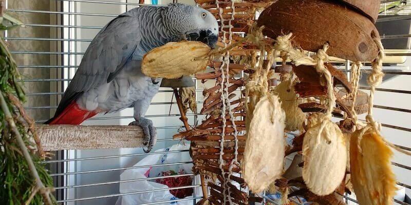 игрушка для попугая жако из кокосового ореха и косточек манго
