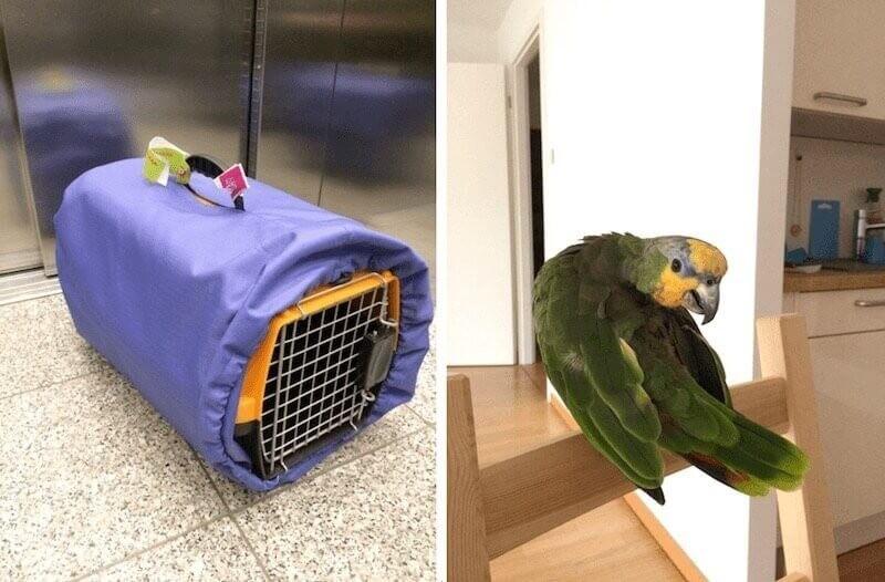 документы для вывозы попугая за границу