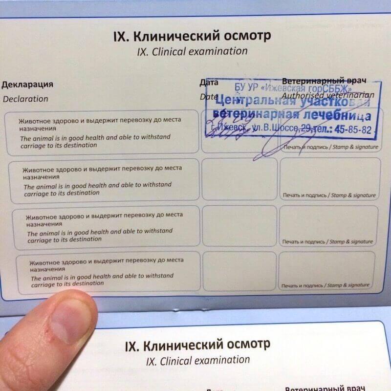 ветеринарный паспорт попугая