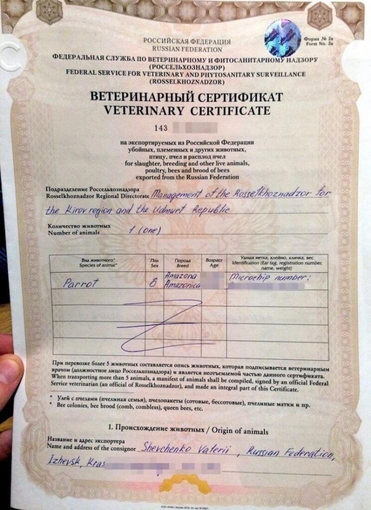 ветеринарный сертификат форма №5A на попугая