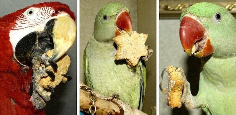 самодельное печенье лакомство из гороховой муки для попугаев