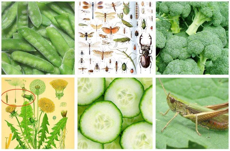 овощи, семена, насекомые для певчих птиц