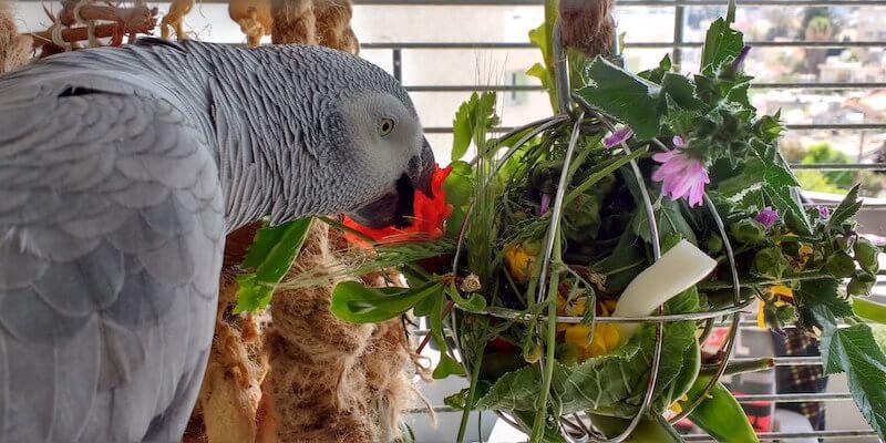как сделать безопасную игрушку фуражилку для попугая жако