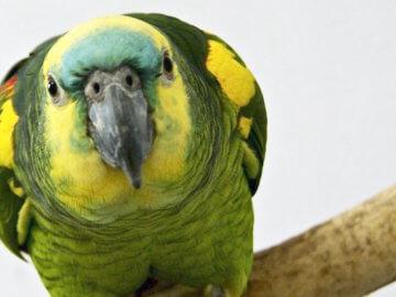 фуражилки и фуражирование для птиц и попугаев