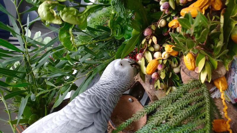 игровой стенд для жако с обилием зеленых веток и незрелых фруктов