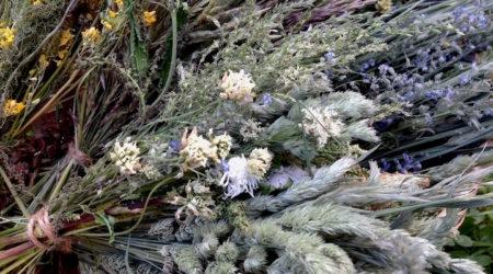 полезные травы и сорняки для попугаев