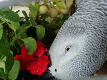 попугай жако ест прянные травы