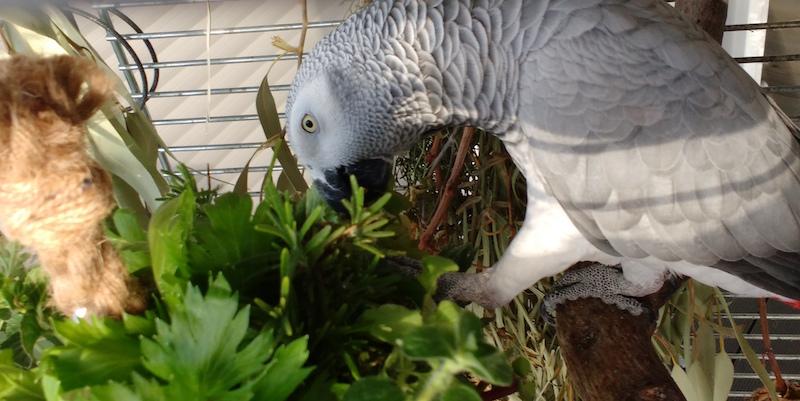 попугай жако ест пряные травы и специи
