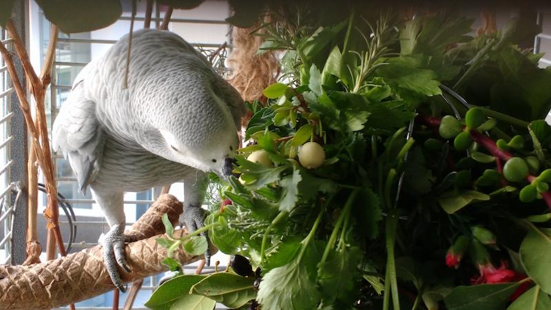 специи прянные травы для попугая жако