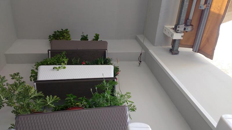 выращивание прянных трав на балконе