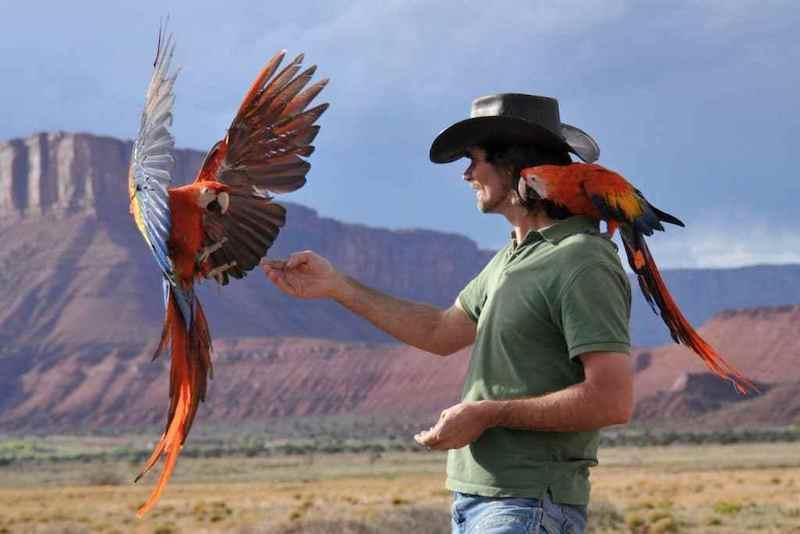 Крис Биро свободные полеты с попугаями