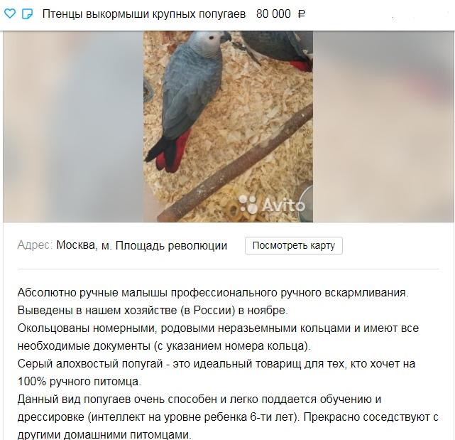 объявление о продаже птенцов попугаев жако на авито