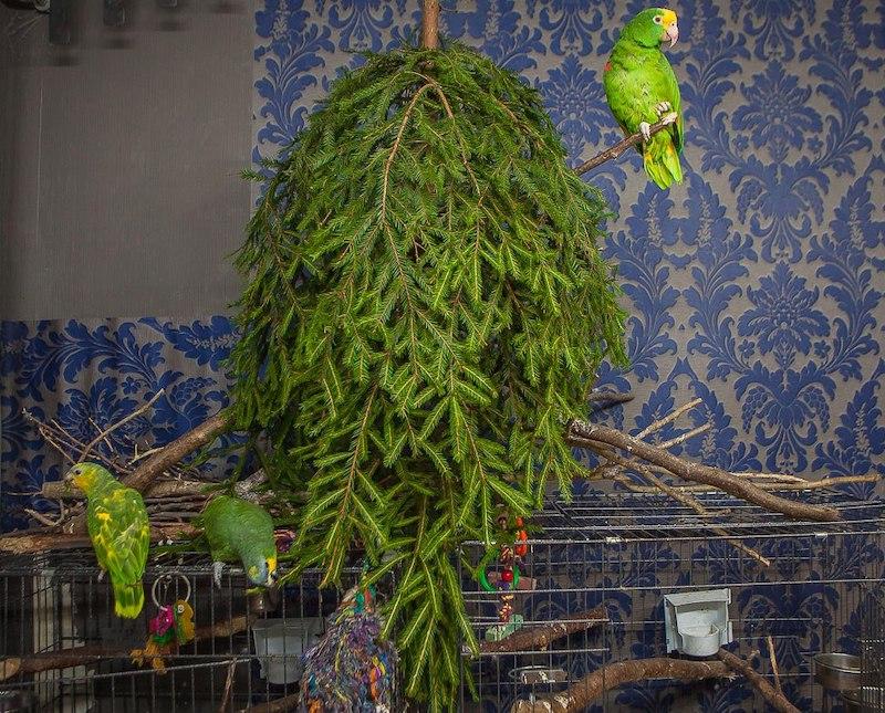 подвешенная елка для попугаев амазонов