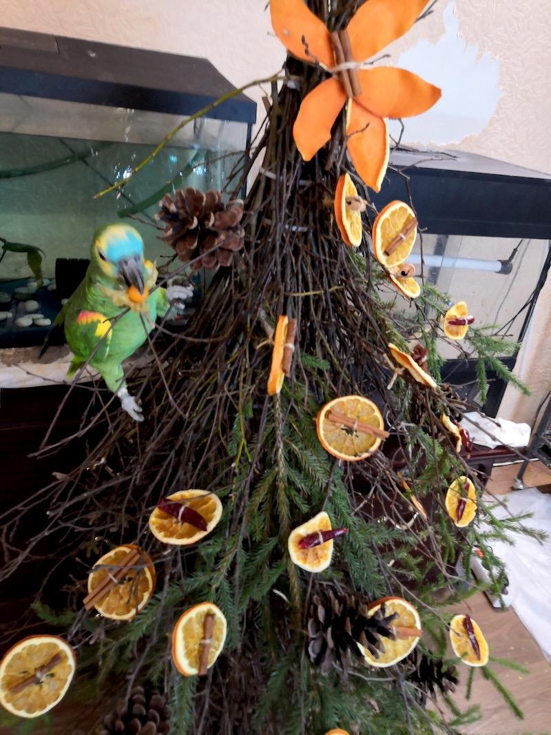 попугай амазон не елке из веток деревьев