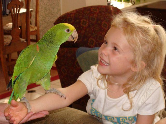 птенец попугая амазона ребенку